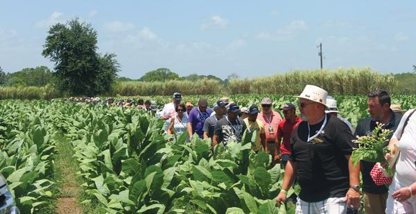 Jeff Boryciewicz Tobacco Field