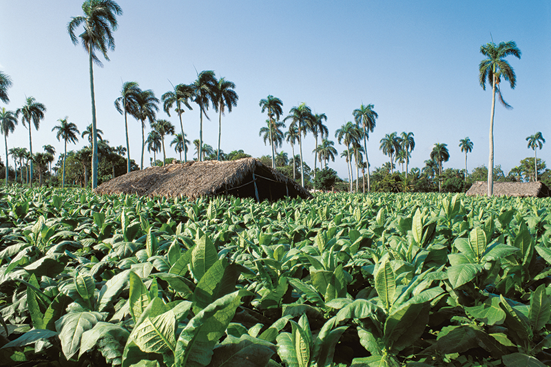 Exploring Cigar Country: Discovering the Dominican Republic