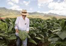 Manuel Perlata, Davidoff Cigars
