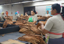 Cigar Factories Around the World Impacted by Coronavirus