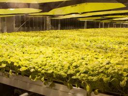 British American Tobacco | Kentucky BioProcessing | COVID-19 Vaccine