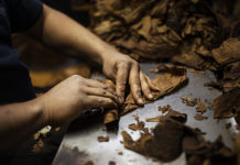 Hands Rolling Cigar